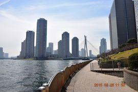 【東京散策21-1】 春の隅田川テラスを歩く 《右岸前編:築地~両国橋》