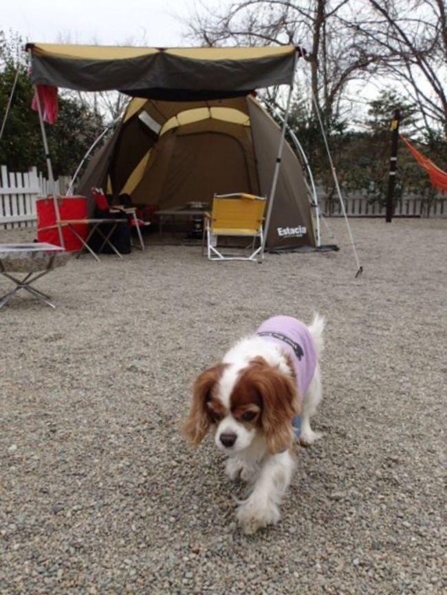2015/4/4(土)から一泊だけ<br />那須のキャンプアンドキャビンズへ。<br /><br />このキャンプ場は7回目の訪問です。<br /><br />もうあまりにも高規格で居心地良すぎるので<br />どこか他のキャンプ場へ行ってみようか<br />という気が起こりません(^_^;)<br /><br /><br />天気予報は<br />土曜日 → 曇り<br />日曜日 → 朝から雨<br /><br />キャンセルも考えたけど、また雨撤収覚悟で<br />90Lのゴミ袋を持参して行ってきました。<br />