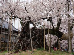 2015.4 満開の桜を訪ねて(1)~山高神代桜