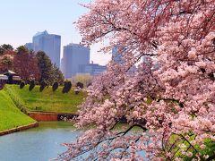 千鳥ヶ淵公園 桜!さくら満開のとき、お堀端に菜の花 ☆乾門~永田町散歩