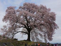 2015.4 満開の桜を訪ねて(2)~わに塚の桜