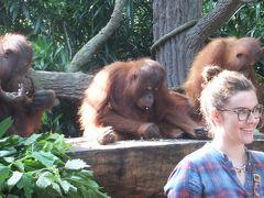 2度目のシンガポール。ラッフルズに2泊・ジョホールバルに2泊など盛り沢山~⑦3日目:シンガポール動物園でオランウータンと朝食。