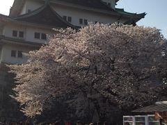 名古屋への旅2015春(8年振りの家族4人旅)3 花見&軽く街歩き編