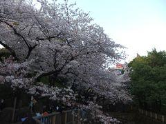 吉宗公が開いた飛鳥山公園のさくら(満開)