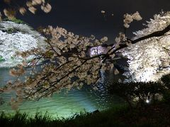 2015桜第四弾☆播磨坂&千鳥ヶ淵の夜桜