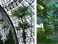 不思議な青い花「ヒスイカズラ」が咲く夢の島熱帯植物館へ行ってみませんか?