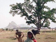 インド幻想行【21】ブッダガヤ:お釈迦様が2500年前に渡ったニランジャナ川の風景が今も残る