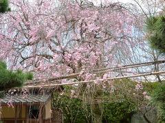 東福寺光明院 4月の風景!2015年