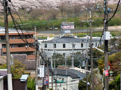 八幡桜だより~男山狩尾から見る背割堤の桜並木