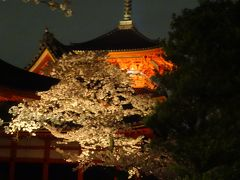 神戸、京都、夜桜、夜景がキレイ