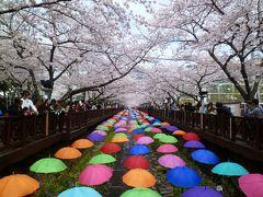 春のプサン❤ドキドキ一人旅 2日目 ~鎮海で桜・サクラ・さくら三昧!~