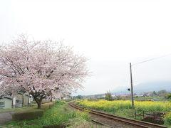 かつてこんな残念な花見旅があっただろうか・・・・・・・母娘旅in阿蘇♪桜の名所を周るはずが全く違った内容に(^^;)