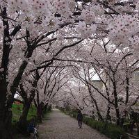 伊丹市天神川沿いの花見 上巻