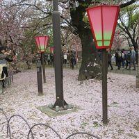 大阪年中行事「造幣局桜の通り抜け」その2