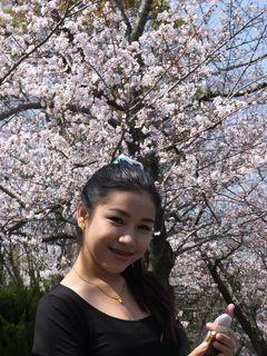 NACKさん、初・日本見聞遊食の旅 8 白鳥公園で桜を満喫する。
