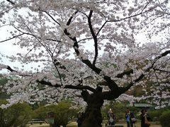 2015桜 1:飛鳥山と六義園