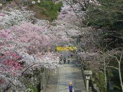 2015春、四国周遊の旅(25):3月31日(9):香川、金刀比羅宮、本殿、神楽殿、神木、絵馬殿、さざれ石