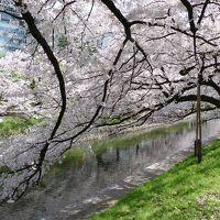 桜満開の富山へ・・・間違えて白川郷へ