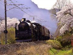 満開な横川の桜並木を見に訪れてみた