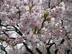 高遠城址の桜と光前寺