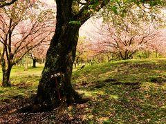 親子3世代 伊豆の旅(熱海~伊東温泉~伊豆高原の桜~ちょっとだけ箱根)