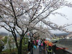 時々の富士山を求めて3日目/2 雨の河口湖さくら祭り