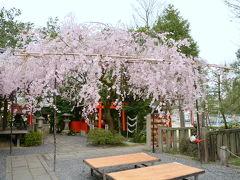 水火天満宮の紅しだれ桜!2015年