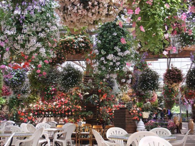 三世代旅行をしてきました。<br />妻の母親が花が好きなことと、娘が生き物好きなんで花と鳥のテーマパークへ…。<br />花と鳥の展示で大人1500円超(各種割引を探せば100円引き)は高い!と誰もが思うところですが、<br />入口の花(ベゴニア、フクシアなど)を見ると…これは2倍払っても見る価値があります。本当オススメ。<br />広島の植物園とは規模も展示の仕方も段違い。恋人どうしで行くと盛り上がりますよ。<br /><br />鳥の方も面白い。エサやりがあちこちにあります。鳥が慣れていて手からも食べてくれます。<br />オオハシは腕にとまらせて写真を撮れます。どこぞのアトラクションに行くとこれだけで千円はくだらないところを「たったの200円」でできます。いい記念になります。<br /><br />鳥のショーも見ごたえがあります。タカやハヤブサのショーは迫力があります。タカのウサギ狩りも見れます!<br />一番の売りはフクロウのショーですね。これは必ず押さえておきたいところです。頭スレスレをフクロウが滑空します。フクロウも腕にとまらせて記念ショットが撮れます。<br /><br />残念だったのはパーク中の「蕎麦屋」が改装中で大好きな手打ちそばが食べれなかったことです(期待していましたので)。<br />1500円分は絶対楽しめます。我が家は食事を入れて5時間も滞在してしまいました。<br />ゆっくり過ごすように余裕を持っていくと良いでしょう。<br /><br />それと駐車場は無料にして欲しいなぁ(今は2時間無料)。これだけ滞在できますのでせめて5時間ぐらい無料でもいいと思います。<br /><br />宿泊は同じ島根の安来の鷺の湯温泉にしました。<br />この報告は別な機会にします。