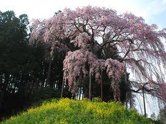 二本松 桜の名木めぐり(福島)