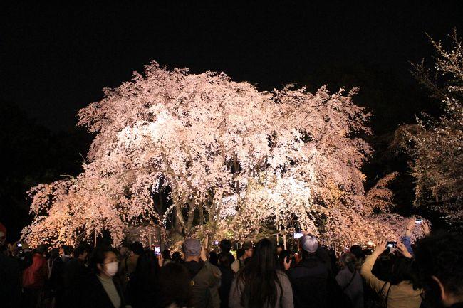今年は例年以上に桜見物に出かける機会に恵まれました。<br /><br />2015年の桜たち、一挙公開です(笑)<br /><br /><br />3月29日(日)上野、谷根千<br />3月30日(月)六義園<br />4月4日(土)東京ドイツ村<br />4月5日(日)皇居東御苑