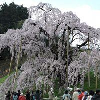 福島の桜①「三春の滝桜」