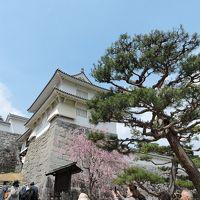 福島の桜②「二本松霞が城」