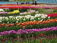 淡路島・東四国庭園めぐり(12) 北島町チューリップフェア