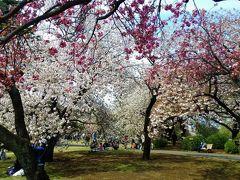八重桜めぐり 東京、横浜  新宿御苑、三ッ池公園、カーボン山 2015年