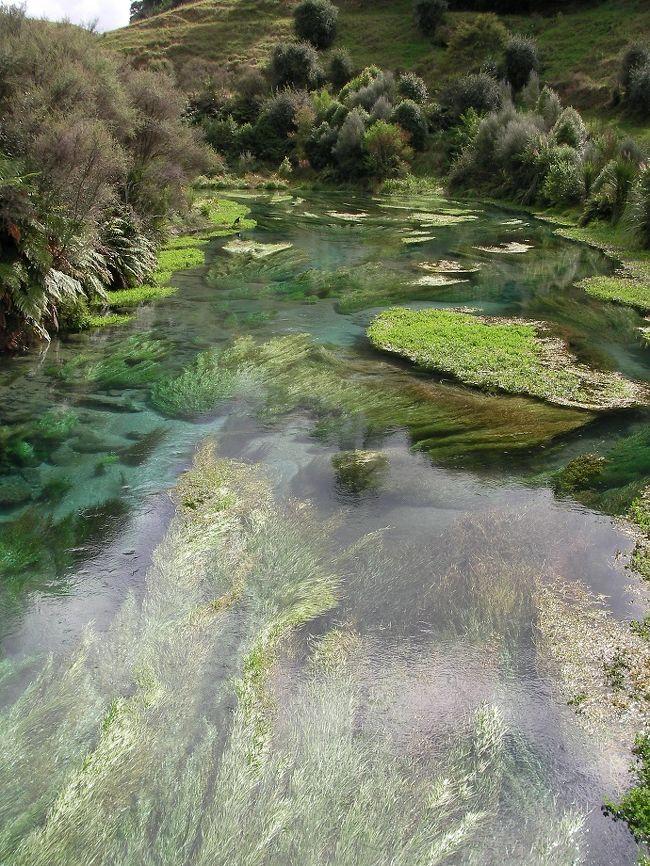 Rotorua3日目。<br /><br />Rotorua湖湖畔で足湯をした後(注!どうも柵が壊れていただけで、危険地帯に足を踏み入れていたかも・・・です。真似しないでください。)、NZの70%のミネラルウォーターを採取するBlue Springsへ。<br />こんな隠れた観光地に行けるのは、ジモティーのじいじたちのお蔭です。<br />でも、ここでも大陸のお方たちが結構な割合で訪れていました。丁度入り口付近には売地があり、NZでも水源が大陸のお方たちに買い占められないか・・とちょっと心配になるようなところでした。<br /><br />Blue Springsで湧く水はママクなどのNZの野草が大地にとりこんだ雨水が50年から100年かけて湧き出すそうです。・・ということはここにある水は少なくとも私が生まれる前に大地に取り込まれた水・・・。<br />後世にこの泉を残したい・・・・と思いました。<br /><br />Youtubeでここのすごい映像を発見!↓是非ご覧ください。<br />https://www.youtube.com/watch?v=5VZRpImpdcg