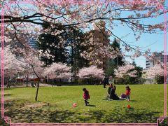 ご近所の桜をもっと見に行こう・・・!! ~青葉神社、錦町公園~