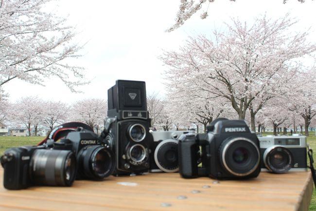 桜前線がやっと青森にも来ました!<br />待ち長かった~(^^;)<br />まずは八戸市の新井田公園へ、写真好きなお仲間と撮影会に行ってきました(*^^*)