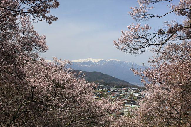 今年、善光寺は7年に一度の御開帳。<br />どうせ行くなら桜の開花時期に合わせて行こうと思い、3か月前にドライブ旅行を計画。<br />善光寺に行くのなら周辺の観光地にも行きたいので、桜で有名な高遠城と松本城にも出かけることにしました。<br />本来なら4月の中旬ごろが桜の見頃なのに今年の開花は平年より早くなり、善光寺や松本城の桜は散り始めていましたが、高遠城と臥龍公園の桜はとてもきれいでした。<br />今回の行程は<br />4月18日(土)高遠城の桜見学後、松本市に移動し松本城や市内見学後、浅間温泉にある伊藤園ホテル浅間の湯に宿泊<br />4月19日(日)善光寺参拝後、須坂市の臥龍公園の桜見学後帰宅<br />今回は初日の高遠城と松本市内の旅行記を紹介します。<br />この日は天気予報では晴れだったのですが、中国からの黄砂の影響か、アルプスの山々がきれいに見えなかったのが残念でした。でも高遠城の桜は少し散り始めていましたが、とてもきれいでした。