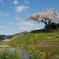 田村市「小沢の桜」を訪ねて(福島)