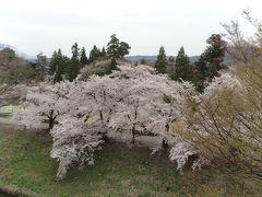 南東北桜の名所めぐり8景  3日間