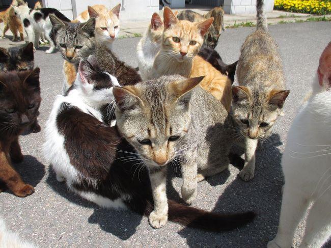 """瀬戸内海に浮かぶ小さな島・男木島(おぎじま)<br /><br />この島には """"うどん県"""" だけではない<br />香川の魅力がたくさんあります。<br /><br />あふれる 「自然」 魅力的な「アート」<br />そして、大挙して押し寄せる 「ネコ」<br /><br />ここは全国に知られる 「猫島」 なのです。<br /><br />しばし、ネコと戯れるとしましょう。<br />"""
