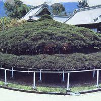 淡路島・東四国庭園めぐり(35) 第72番札所 曼荼羅寺参拝