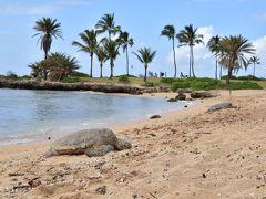 12年振り、5回目のハワイ ~前半~