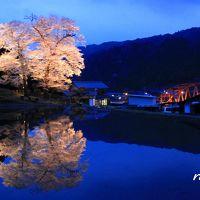青春18切符一人旅 下呂温泉でまったり~苗代桜にうっとり~♪