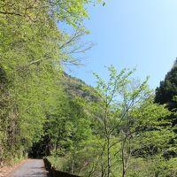 川苔山 新緑