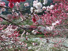 桃源郷 阿智村月川温泉~花桃の里 花桃まつり に行ってきました。 2015GW