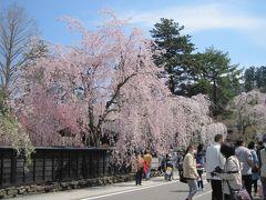 みちのく小京都・角館の桜