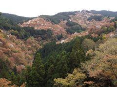 吉野の千本桜、必見ですよ!
