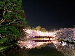 凄い!!凄すぎる弘前城の夜桜ライトアップ  「さくら前線北上中!」