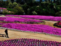 花を求めて「世羅高原へ」その1